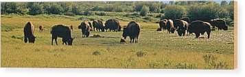 A New Beginning Grand Teton National Park Wood Print by Ed  Riche