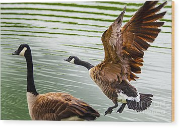 A Pair Of Canada Geese Landing On Rockland Lake Wood Print by Jerry Cowart