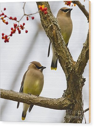 A Pair Of Cedar Waxwings Wood Print