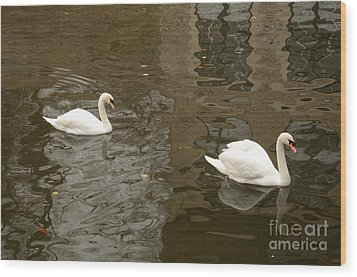 Wood Print featuring the photograph A Pair Of Swans Bruges Belgium by Imran Ahmed