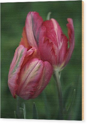 A Pair Of Tulips In The Rain Wood Print by Rona Black