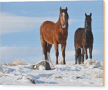 Wood Print featuring the photograph A Pair Of Wild Mustangs In Snow by Vinnie Oakes