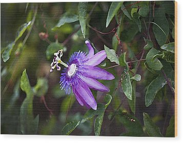 A Passion For Flowers Db Wood Print by Rich Franco