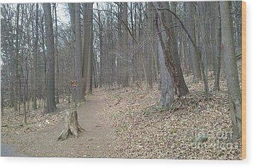 A Path To Follow Wood Print