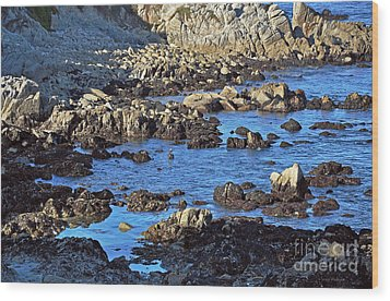 A Pelican's Rocky Retreat Wood Print by Susan Wiedmann