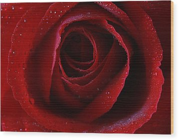 Wood Print featuring the photograph A Perfect Rose by Keith Hawley