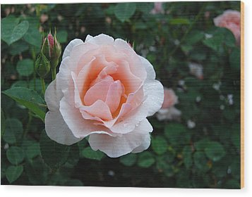A Pink Rose For You Wood Print by Eva Kaufman