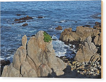 A Plant Grows On Ancient Seaside Rocks Wood Print by Susan Wiedmann