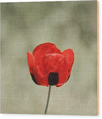 A Pop Of Red And Black Wood Print by Kim Hojnacki