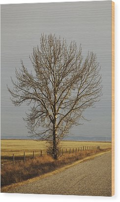 A Poplar Tree By The Side Of A Gravel Wood Print by Roberta Murray
