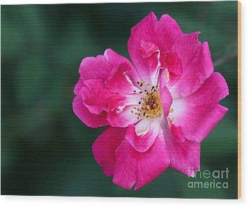 A Pretty Pink Rose Wood Print by Sabrina L Ryan