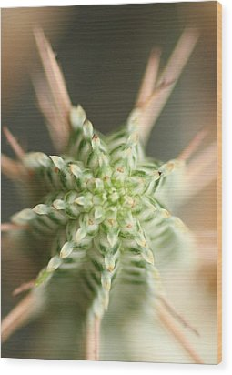 A Prickly Affair Wood Print by Jacqui Collett