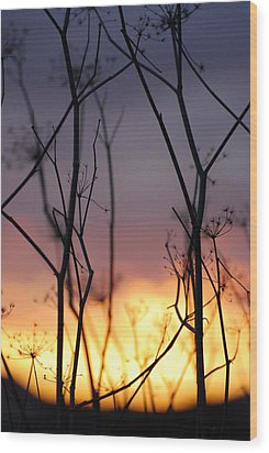 Wood Print featuring the photograph A Queen's Sunset by Jani Freimann