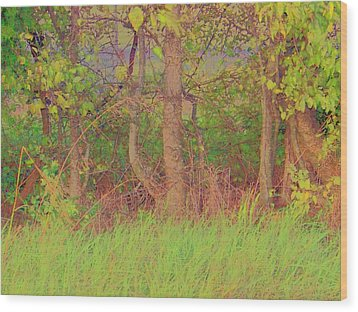 Wood Print featuring the photograph A Quiet Place by Shirley Moravec