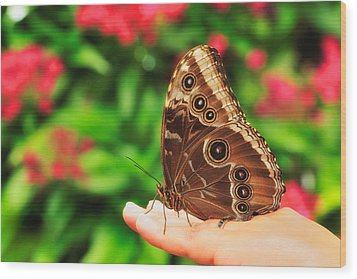 A Random Walk In The Butterfly Garden Wood Print by Photography  By Sai