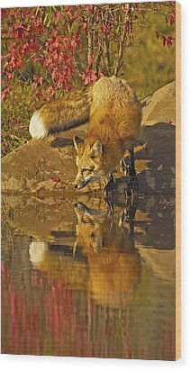 A Real Fox Wood Print