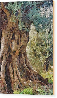 A Really Old Olive Tree Wood Print by Dragica  Micki Fortuna