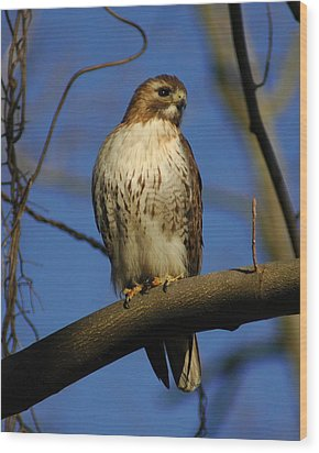 Wood Print featuring the photograph A Red Tail Hawk by Raymond Salani III