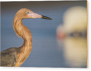 A Reddish Egret Profile Wood Print by Andres Leon