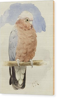 A Rose Breasted Cockatoo Wood Print by Henry Stacey Marks