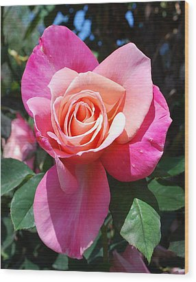 A Rose By Any Other Name Wood Print by Richard Hinger