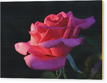 Wood Print featuring the photograph A Rose Is A Rose by David Andersen