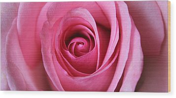 Wood Print featuring the photograph A Rose Is A Rose Is by Silke Brubaker