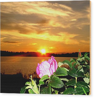 A Rosy Sunset In Maine Wood Print