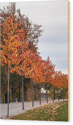A Row Of Autumn Trees Wood Print