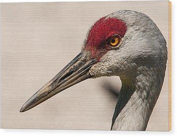 A Sandhill Crane Portrait Wood Print