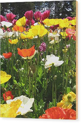 A Sea Of Poppies Wood Print