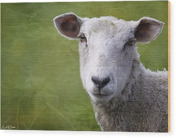 A Sheep Wood Print by David Simons