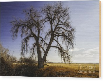 Wood Print featuring the photograph A Simple Tree by Kristal Kraft