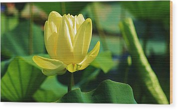 A Single Lotus Bloom Wood Print by Bruce Bley