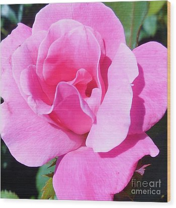 A Single Pink Rose Wood Print by Eloise Schneider