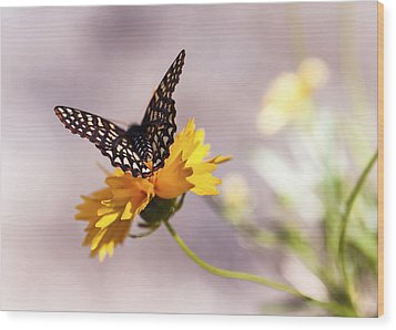 A Sip Of Coreopsis Wood Print