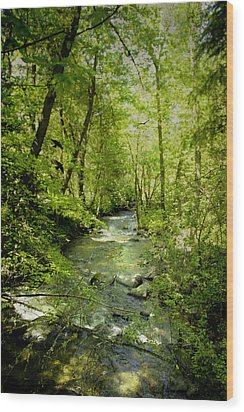 A Spring Day At Lithia Creek Wood Print by Diane Schuster