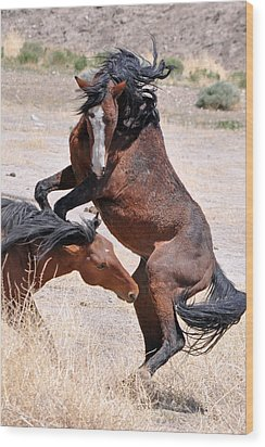 A Stallion Defends His Territory Wood Print