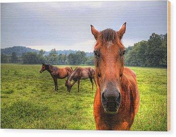 A Starring Horse 2 Wood Print