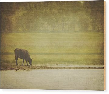 A Steer At A Pond Having A Drink In Red Wood Print by Roberta Murray