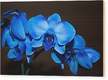 Wood Print featuring the photograph A Stem Of Beautiful Blue Orchids by Sherry Hallemeier