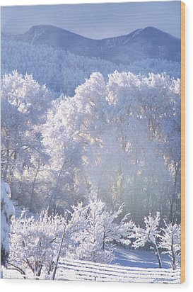 A Study In Frosty Hues Of Winter Whites And Blues Wood Print