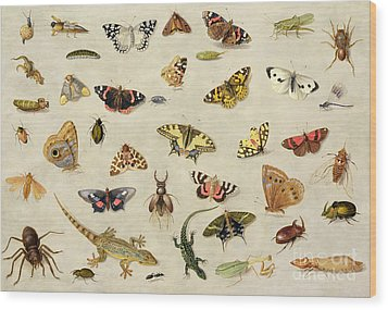 A Study Of Insects Wood Print by Jan Van Kessel