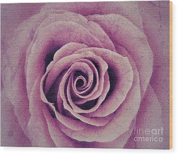 A Sugared Rose Wood Print
