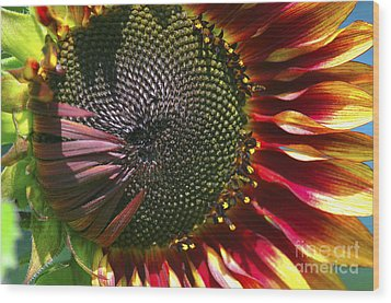 A Sunflower For The Birds Wood Print by Sharon Talson