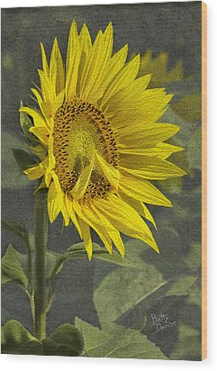 Wood Print featuring the photograph A Sunflower's Prayer by Betty Denise
