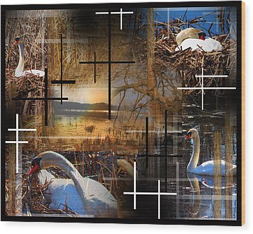 A Swans Mysterious World Wood Print by Andrew Sliwinski