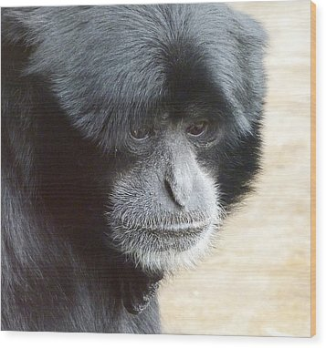 A Thoughtful Siamang Wood Print by Margaret Saheed
