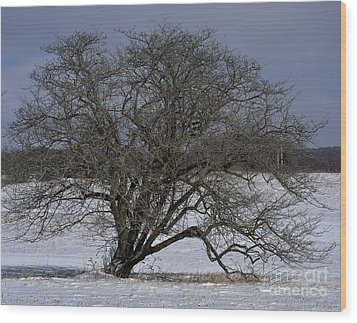 Wood Print featuring the photograph A Tree In Canaan 2 by Randy Bodkins