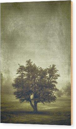 A Tree In The Fog 2 Wood Print by Scott Norris